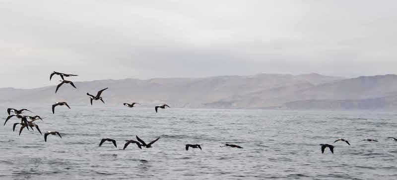 Birds Isles Billastes