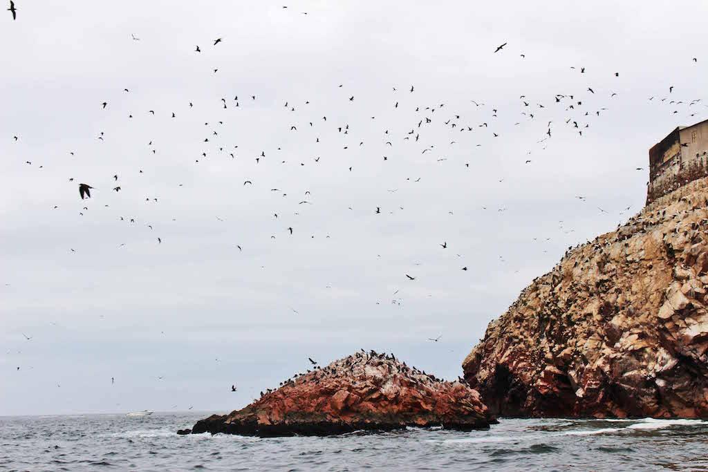 Birds and cliffs 2