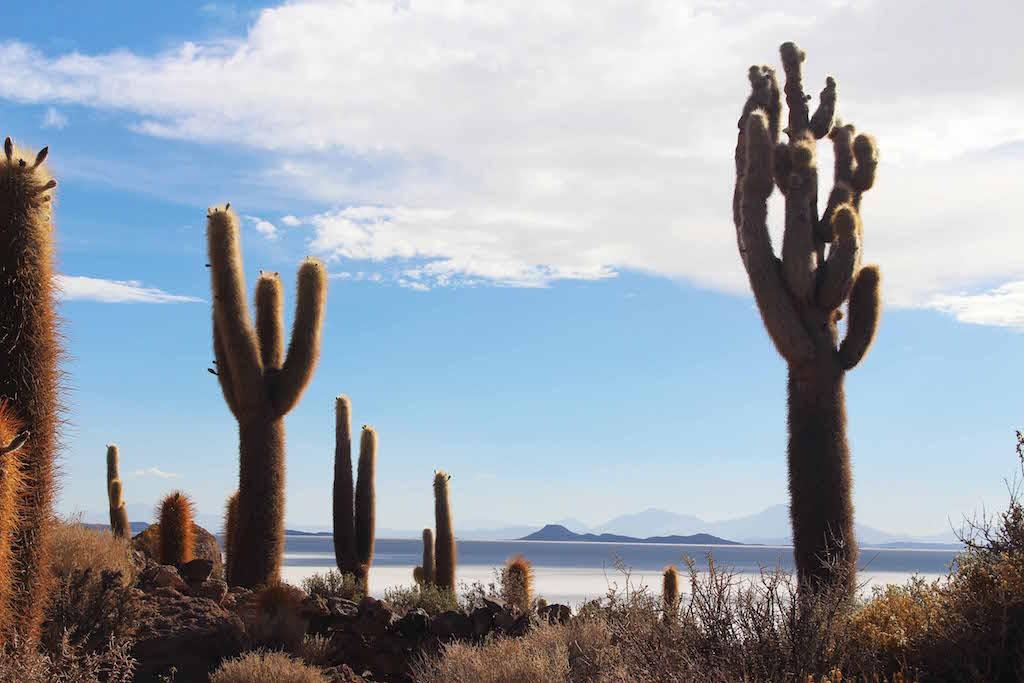 Cactus Island, Bolivian Salt Flats, Inca to Inuit