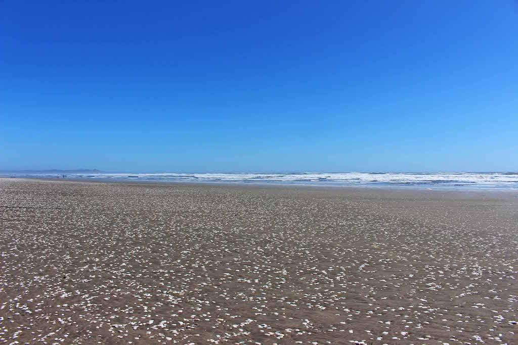 White shells of Chiloe Beach