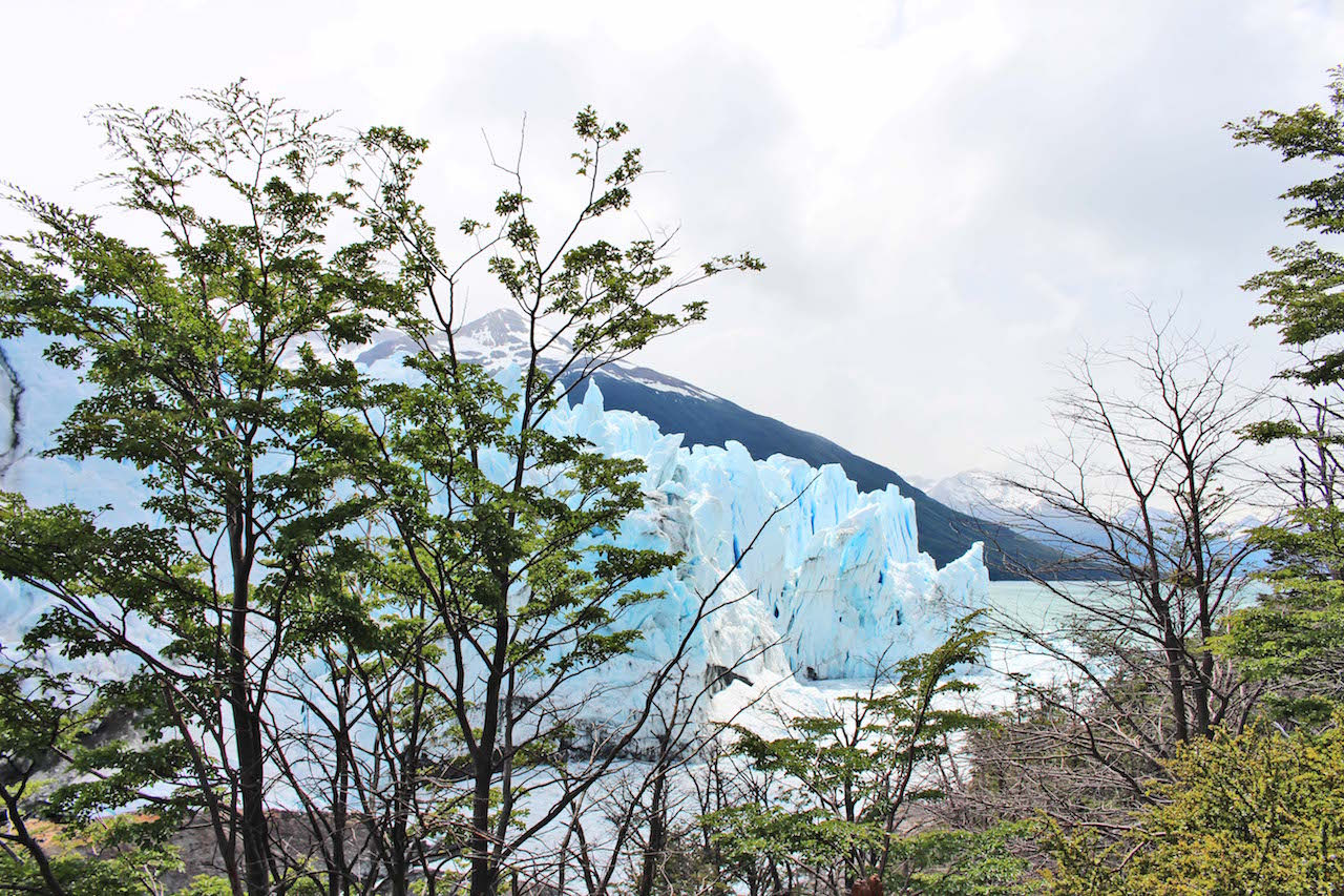 Perito Moreno Through Trees 2 final