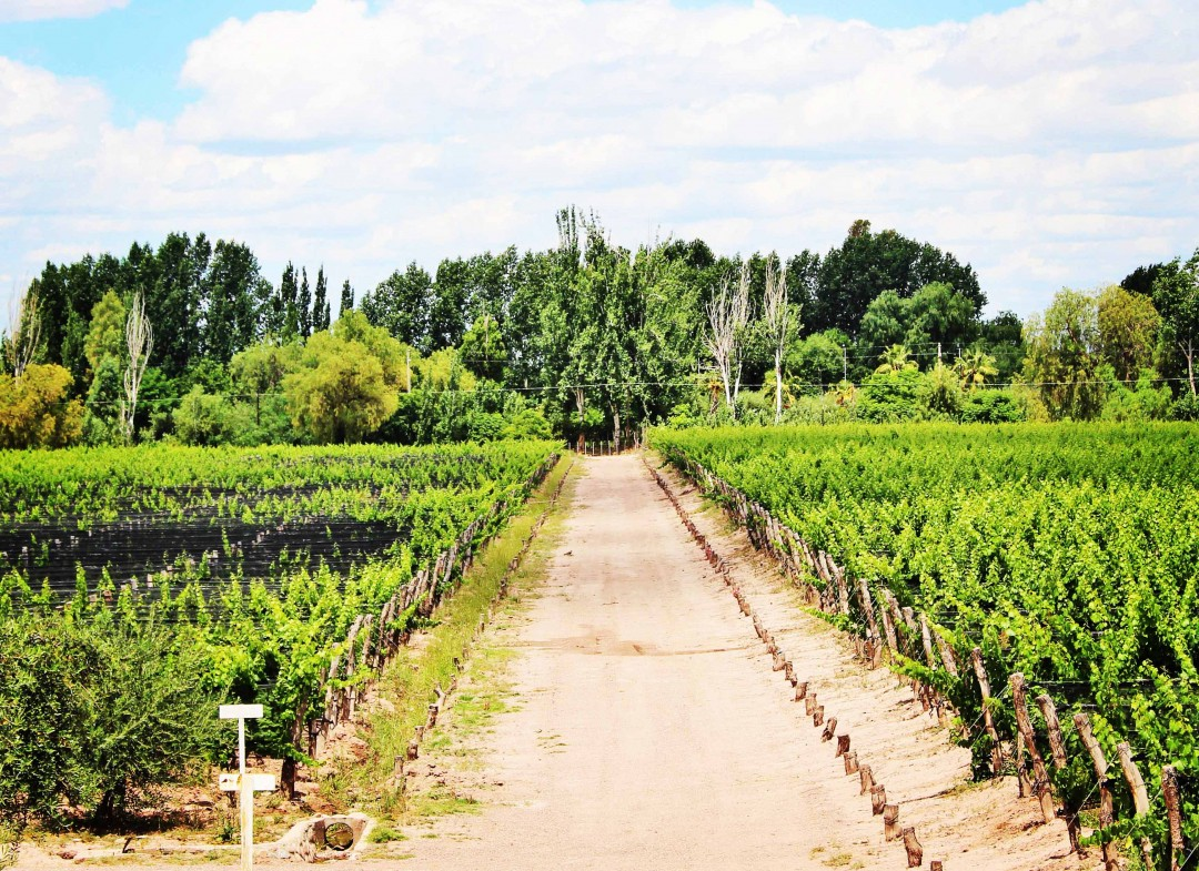 How To Enjoy Mendoza On A Budget
