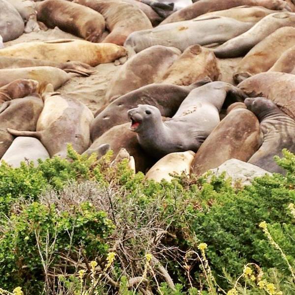 Inca to Inuit - The Big Sur